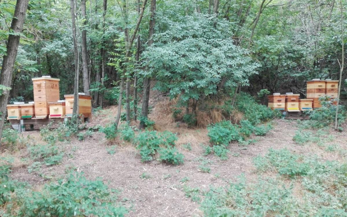Bienenstand in Großengersdorf